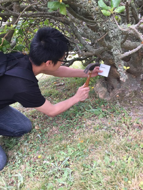 Male student hammering chew card to tree